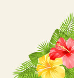 Vintage Background with Colorful Hibiscus Flowers Stock Photo