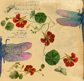 Vintage background with dragonfly illustration Stock Photos