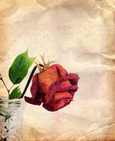 Vintage background with dried rose Stock Image