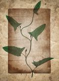 Vintage background with dry plant old paper texture royalty free stock photo
