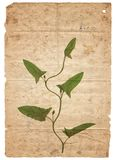 Vintage background with dry plant on paper texture stock image