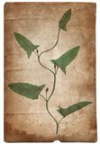 Vintage background with dry plant on paper texture stock photography