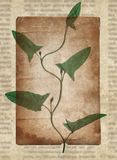 Vintage background with dry plant on paper texture stock photos