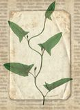 Vintage background with dry plant on paper texture royalty free stock photos