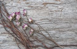 Vintage background with dry tea roses and branches Stock Image