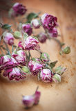 Vintage background with dry tea roses Royalty Free Stock Images