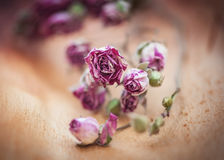 Vintage background with dry tea roses Royalty Free Stock Photography
