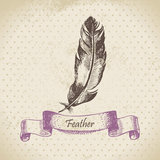 Vintage background with feather. Hand drawn illustration Royalty Free Stock Photography