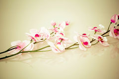 Vintage background with flower Royalty Free Stock Image