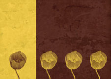 Vintage background - Flower abstraction Royalty Free Stock Images