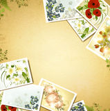 Vintage background with flower photos Royalty Free Stock Photo