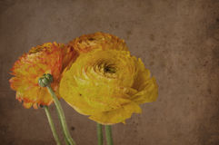 Vintage background with flowers Stock Photos