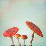 Vintage background with fly agaric Stock Photo