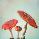 Vintage background with fly agaric Royalty Free Stock Photography