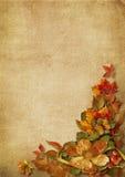 Vintage background with gorgeous autumn decorations Stock Photos