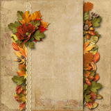 Vintage background with gorgeous border autumn decorations Stock Image