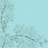 Vintage background with grape branch Royalty Free Stock Photos