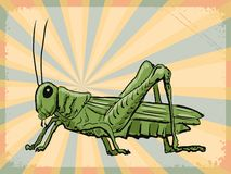 Vintage background with grasshopper Royalty Free Stock Image