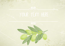 Vintage background with a green olive branch, place for text Stock Photo