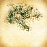 Vintage background green spruce branches in the snow Stock Image