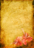 Vintage background with a hibiskus Stock Images