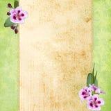 Vintage background  for invitation Stock Images