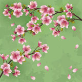 Vintage background with Japanese cherry tree sakur Royalty Free Stock Photos