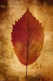 Vintage background with leaf Stock Photography