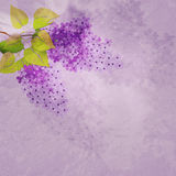 Vintage background with lilac branch Stock Images