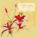 Vintage background with Lily flowers Stock Photo