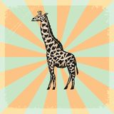 Vintage background with motive of safari Stock Images