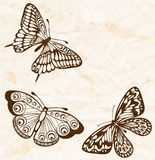 Vintage background. Old crumpled paper with flying butterflies in the corner. Many similarities to the author's profile Royalty Free Stock Image