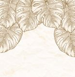Vintage background. Old crumpled paper with leaves Monstera with outline in the corner. Royalty Free Stock Photography
