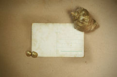 Vintage background with old postcard,. Vintage background with old postcard and seashells Royalty Free Stock Photos