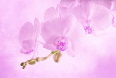 Vintage background with orchid flower Royalty Free Stock Photography