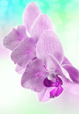 Vintage background with orchid flower Stock Image