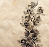Vintage background with orchid flowers Royalty Free Stock Photography