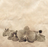 Vintage background with orchid flowers Stock Images