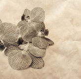 Vintage background with orchid flowers Stock Image