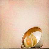 Vintage background with physalis in antique cup Royalty Free Stock Images