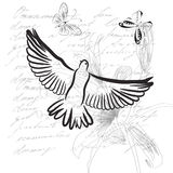 Vintage background with Pigeon Royalty Free Stock Photos