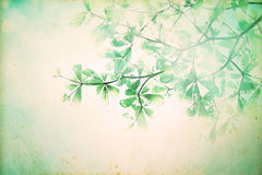 Vintage background with retro color tone of leaf branch tree. The vintage background with retro color tone of leaf branch tree filtered by grunge texture Royalty Free Stock Image