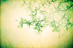 Vintage background with retro color tone of leaf branch tree. The vintage background with retro color tone of leaf branch tree filtered by grunge texture Royalty Free Stock Photo