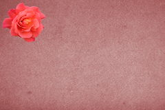 Vintage background with rose Royalty Free Stock Photo