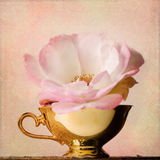 Vintage background with rose and cup Royalty Free Stock Photo