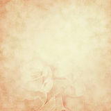 Vintage background with rose flowers Royalty Free Stock Images
