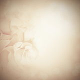 Vintage background with rose flowers Stock Photo