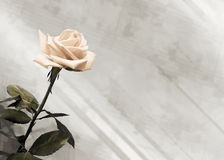 Vintage background with  rose Stock Photos