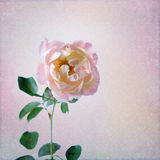 Vintage background with rose Royalty Free Stock Photography