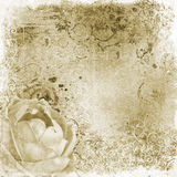 Vintage background with rose Royalty Free Stock Images